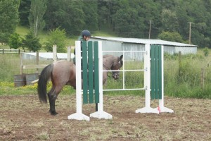 Bowdrie and Simrat at a Working Equitation show, where they placed second.